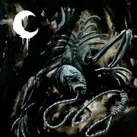 A Silhouette In Splinters Leviathan