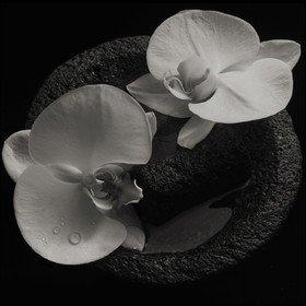 Corpse Flower Mike Patton & Jean-Claude Vannier