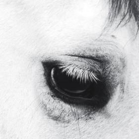 Horse Heaven Creepoid