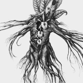 Iv: Mandragora Botanist