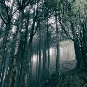 In The Dark Woods Akira Kosemura