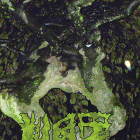 Chartreuse Bull Vaz