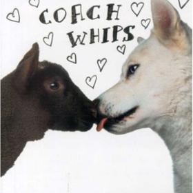 Bangers Vs. Fuckers Coachwhips