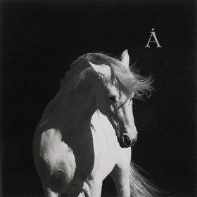 Лошадь Белая Аквариум