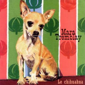 Le Chihuahua Mara Tremblay