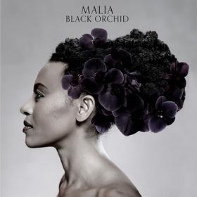 Black Orchid Malia