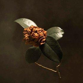 Young Sick Camellia St. Paul & The Broken Bones